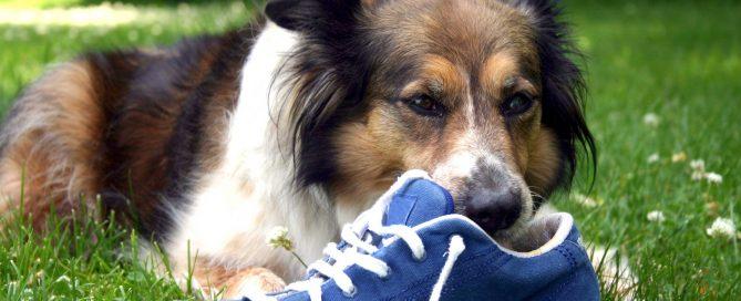 comportementaliste canin